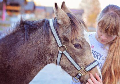 foal-5733172_1920